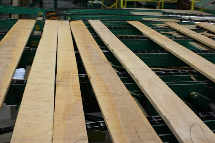 Yellow Birch Lumber being processed
