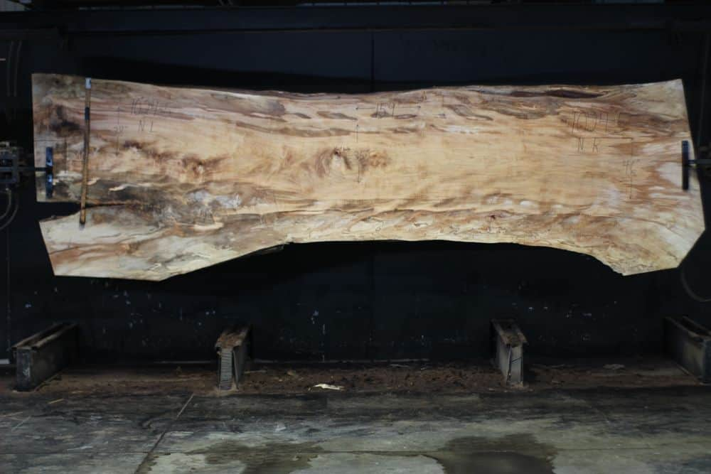 Spalted Maple Slab 1024-5, Narrow Face, surfaced size  2 3/8″ x 35-50″ avg. 41″ x  13′ $1850 SALE PENDING PO 21-8007 1-31-21
