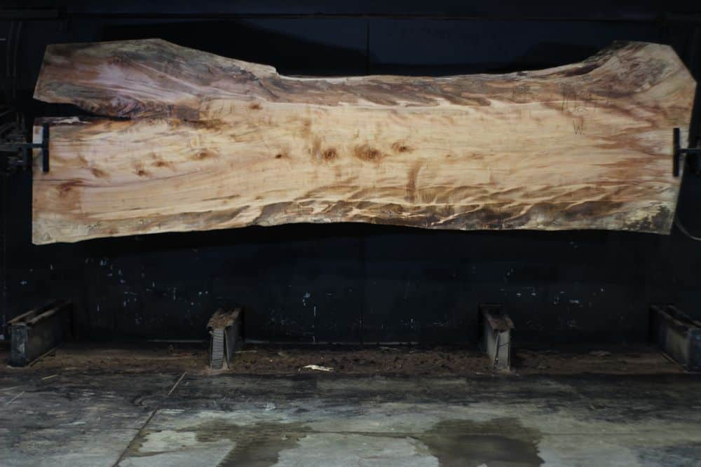 Spalted Maple Live Edge Slab 1024-5, Wide Face  SALE PENDING PO 21-8007 1-31-21