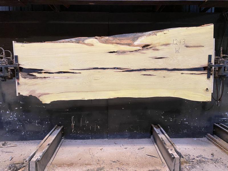 osage orange slab 1243, wide face