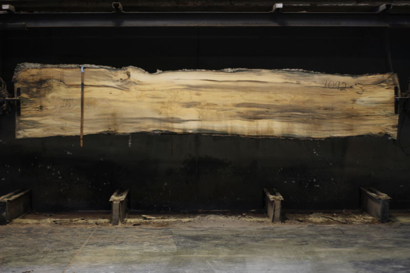 spalted hackberry slab 1092-3 rough size 2″ x 24-30″ avg. 28″ x 14′ $850