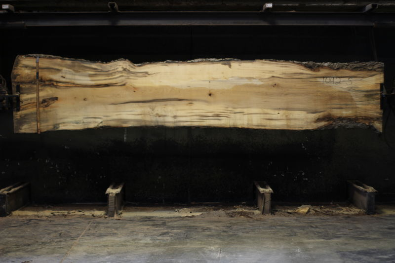 spalted hackberry slab 1092-5 rough size 2″ x 21-34″ avg. 30″ x 14′ $950