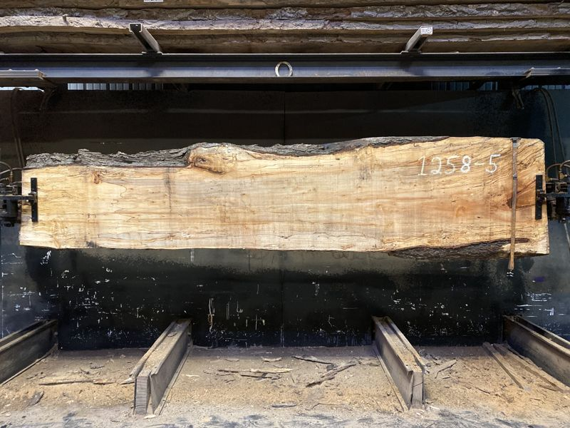spalted maple slab 1258-5 rough size 2.5″ x 21-30″ avg. 25″ x 11′ $1100