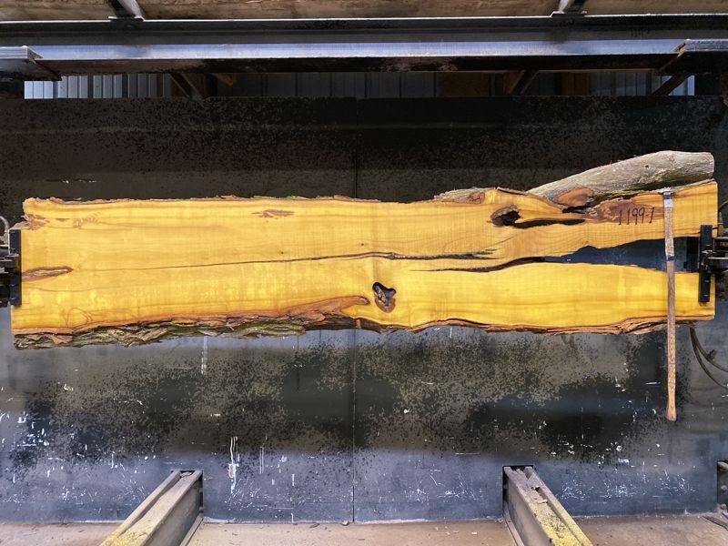 osage orange slab 1199-1 rough size 2.5″ x 16-21″ avg. 19″ x 9′ $500