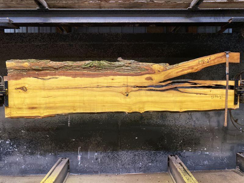 osage orange slab 1199-2 rough size 2.5″ x 18-26″ avg. 19″ x 9′ $575