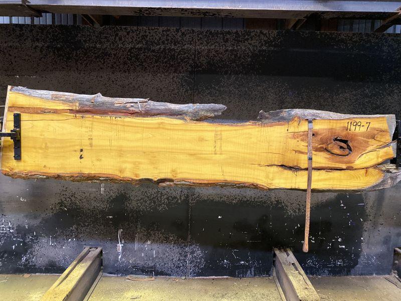 osage orange slab 1199-7 rough size 2.5″ x 14-19″ avg. 17″ x 9′ $500