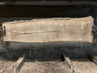 walnut slab 1184-9 after being kiln dried.  Narrow side.
